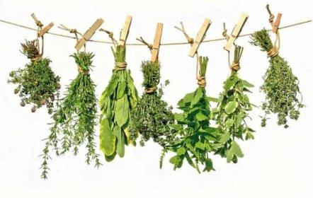 Zdravotní přednáška o bylinkách a mastičkách 1